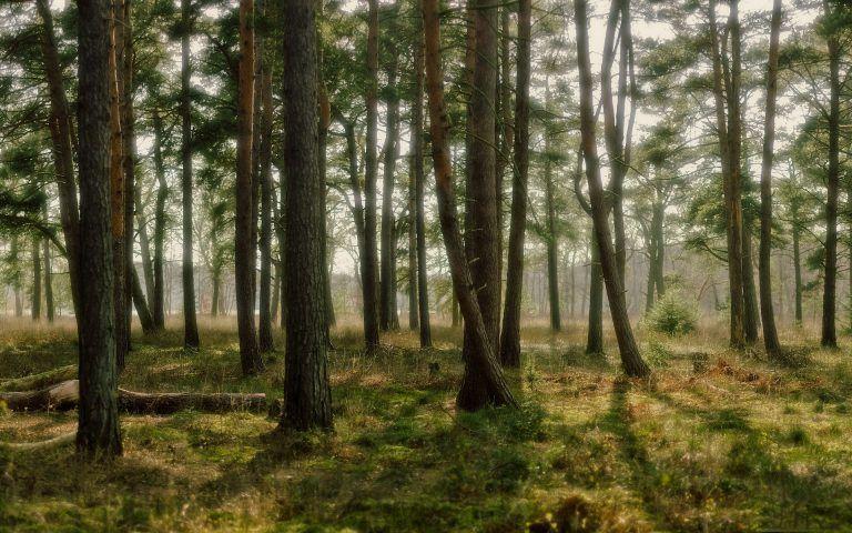 Slováci si kupujú stromy aby ochránili les. Jeden stojí 50€!